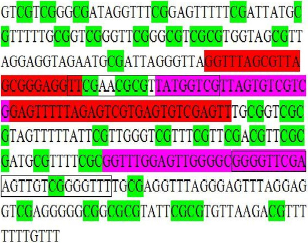 The primers of MS-HRM and MSP assays for CST6 promoter methylation. The MS-HRM primers are shown in red. The outer MSP primers are framed, while the inner ones are shown in purple. The region from −162 up to +188 is depicted (+1 is the Transcriptional start site). Note that this sequence is produced after bisulfite conversion of genomic DNA. All CpGs are considered to be methylated, and therefore are unaffected during the conversion process.