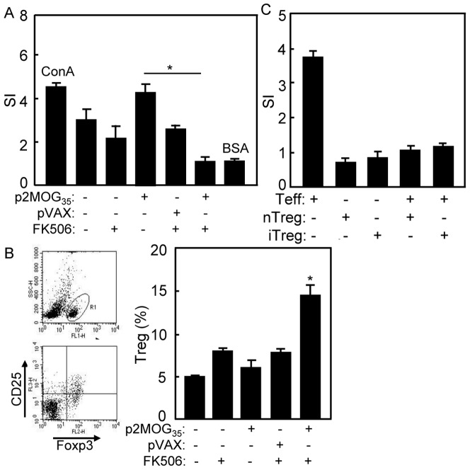 Immune tolerance was restored in treated EAE mice. A. At day 4 after the second treatment, T cell proliferation by MTT method was performed with MOG 35–55 peptide as stimulation antigen, ConA as positive control and BSA as irrelevant antigen. B. At day 4 after the second treatment, the splenocytes of treated EAE mice were prepared for Treg cells analysis. Gating on CD4 + T cells, Treg cells (CD4 + CD25 + Foxp3 + ) were counted relatively to total CD4 cells by flow cytometry. C. Treg cells from naïve mice (nTreg) or FK506/p2MOG 35 treated mice (iTreg) were co-culture with CD4 + CD25 − T cells from naïve C57BL/6 mice respectively. Proliferation was tested by MTT method. Bar, mean and SD from 3 independent experiments, each using at least three mice per group (n = 3); *, p