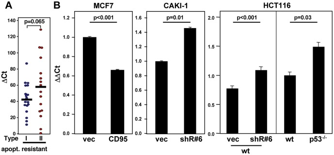 CD95 is a negative regulator of let-7. ( A ) Let-7d expression in apoptosis resistant Type I and Type II cells among the NCI60 cell lines. ( B ) Let-7c expression determined by quantitative real-time PCR in cells with modulated CD95 expression; left panel: MCF7 cells overexpressing CD95; center panel: CAKI-1 cells with CD95 knockdown with shR#6; right panel (left): HCT116 wt cells expressing either vector or shR#6, and (right) wt and p53 −/− cells.