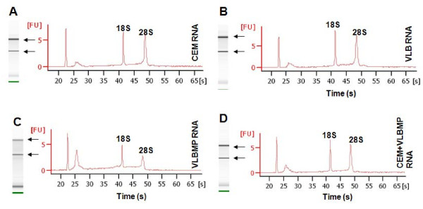 RNA integrity of samples. RNA derived from ( A ) the drug sensitive-recipient cell (CEM), ( B ) drug-resistant VLB 100 cells, ( C ) their isolated MPs (VLBMP) and ( D ) the drug sensitive-recipient cells after MP transfer (CEM + VLBMP) was analysed using Agilent RNA 6000 Nano kit by Agilent 2100 Bioanalyzer. The RIN value of the samples ranged between 6.2-9.2. Data is representative of a typical experiment