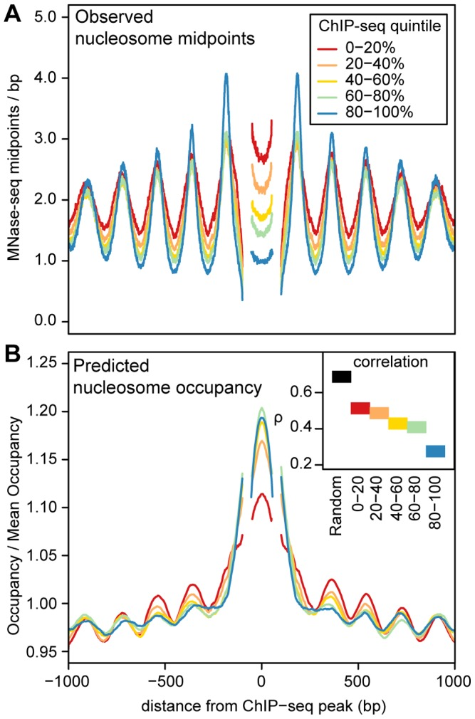 Predicted and observed nucleosome occupancy around ChIP–seq peaks. A. Mean MNase midpoint depth around ChIP-seq peak summits, aggregated across 5 transcription factors (CTCF, NF-kB, Irf4, C-fos and GABP). Regions are aligned such that the estimated locations of the +1 nucleosome, the −1 nucleosome and the midpoint between the nucleosomes are at the same position. Segments that have data from less than 50% of the ChIP-seq peaks (because of the variable spacing between nucleosomes) are omitted. Regions are stratified into ChIP-seq read depth quintiles, (higher quintiles indicate higher transcription factor occupancy). B. Predicted nucleosome occupancy from an in vitro sequence model [33] . Each region is normalized by the mean predicted occupancy of the entire region. As in A, regions are aligned on putative nucleosome positions and are stratified into ChIP-seq read depth quintiles and segments with data from less than 50% of the ChIP-seq peaks are omitted. The inset shows Spearman's rank correlation ( ρ ) between predicted and observed nucleosome occupancy for these regions and for 1000 randomly sampled genomic regions.