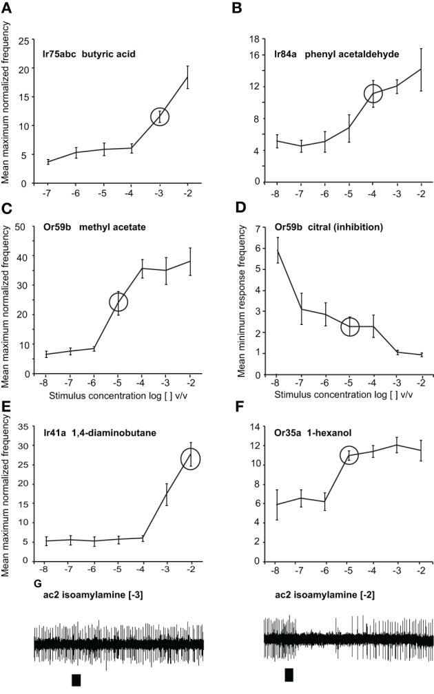 Responses to odors at different doses. Dose-response curves presented as normalized maximum frequency response for (A) Ir75abc-expressing neurons to butyric acid n = 8–13 (B) Ir84a-expressing neurons to phenylacetaldehyde, n = 9–12. (C) , Or59b-expressing neurons to methyl acetate, n = 8–17 (D) Or59b-expressing neurons to citral presented as the minimum frequency, n = 6–10. (E) Ir41a-expressing neurons to 1, 4-diaminobutane n = 6–8 (F) . Or35a-expressing OSNs to 1-hexanol, n = 6–8. (G) Representative traces showing the response of OSNs of ac2 sensilla to isoamylamine at two different concentrations (responses to lower concentrations were not observed). Please note that while only Ir41a-expressing neurons are excited by 1, 4-diaminobutane in this sensillum (ac2), all neurons are inhibited by isoamylamine, and we thus label the inhibitory responses with the entire sensillum label.