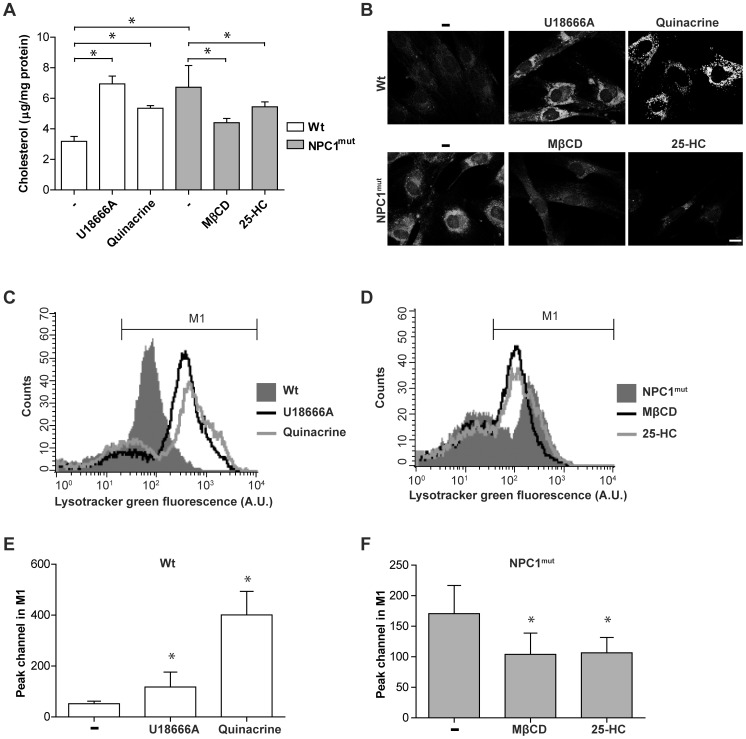 Cholesterol modulation in human fibroblasts is associated with alterations of the lysosomal compartment. Human wt fibroblasts were treated with U18666A or quinacrine to induce cholesterol accumulation, and NPC1-mutant fibroblasts were treated with methyl-β-cyclodextrin (MβCD) or 25-hydroxy cholesterol (25-HC) to revert cholesterol storage. A ) Measurement of unesterified cholesterol (n = 4) and B ) representative images of filipin staining (scale bar 10 µm). C and D ) Representative histogram from flow cytometric analysis of Lysotracker fluorescence staining. M1 gate denotes the highly fluorescent population. E and F ) Quantification of peak channel in the M1 population (seen in C and D; n = 4). Data are presented as the mean ± SD, * p≤0.05.