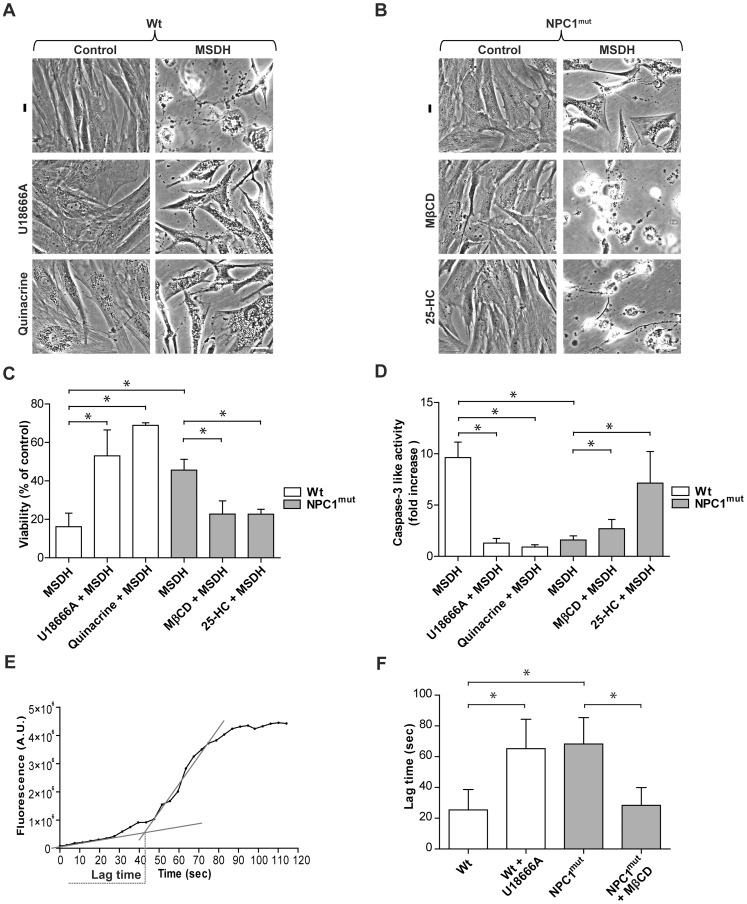 Manipulation of lysosomal cholesterol content modulates the cellular sensitivity to apoptosis. Cholesterol content of human fibroblasts was modulated using U18666A, quinacrine, methyl-β-cyclodextrin (MβCD) or 25-hydroxy cholesterol (25-HC) before apoptosis was induced using O-methyl-serine dodecylamide hydrochloride (MSDH; 24 h). Phase contrast images of A ) wt and B ) NPC1-mutant fibroblasts (NPC1 mut ). Scale bar 20 µm. C ) Viability of cultures in A and B, respectively, assessed by the MTT assay (n = 4). Viability is expressed as percentage of untreated cultures. D ) Caspase-3 like activity (n = 4–8). E ) Representative curve of increase in green fluorescence during photo-oxidation of acridine orange. F ) Quantification of lag time (as presented in E; n = 5–6). Data are presented as the mean ± SD, * p≤0.05.
