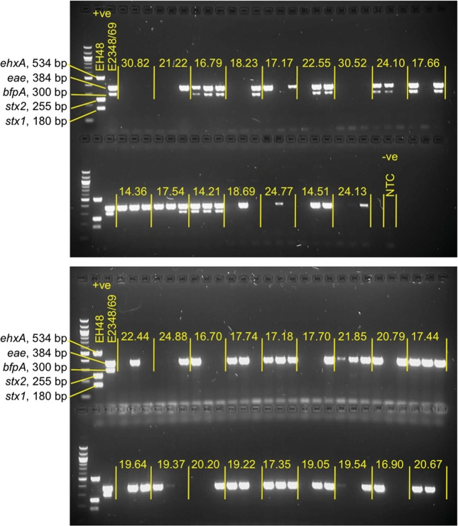 Gels showing the results of a multiplex polymerase chain reaction (PCR) assay for enteropathogenic Escherichia coli (EPEC), Shiga toxin–producing E. coli , and enterohemorrhagic E. coli (EHEC). Individual isolates from 34 specimens were subjected to a multiplex PCR as described in the text. Each specimen, separated by yellow vertical lines, consists of 3 individual isolates. The yellow values indicate the cycle threshold obtained for each specimen in the real-time PCR used in the initial screening for eae . The amplicons produced by the positive controls, EPEC E2348/69 ( eae and bfpA ) and EHEC EH48 ( stx1 , stx2 , and ehxA ) are also shown. 100 bp DNA ladder was used as a molecular size marker. Abbreviation: NTC, no template control.