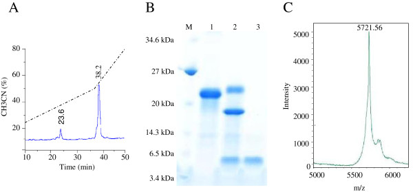 Purification of recombinant PgD5 produced by E. coli BL21 (Origami pLys S) DE3. ( A ) RP-HPLC chromatography of the His6-SUMO-PgD5 fusion protein after cleavage with the SUMO protease. Elution times are marked. ( B ) SDS-PAGE analysis of the His6-SUMO-PgD5 fusion before and after SUMO protease treatment. Lane M, low molecular weight marker (New England Biolabs). Lane 1, Purified fusion protein by Ni-NTA column. Lane 2, SUMO protease cleavage products after 60 min. Lane 3, Purified PgD5 peptide after SUMO protease digestion and reverse-phase chromatography. ( C ) Mass spectrometric analysis of recombinant PgD5 after separation from the His6-SUMO tag using reverse-phase chromatography.
