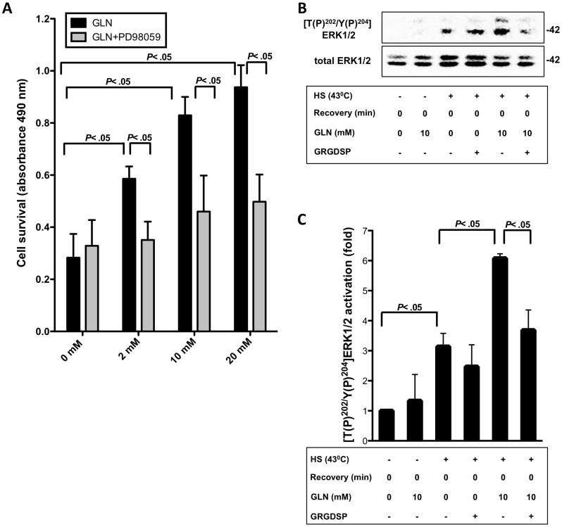 ERK1/2 activation is involved in GLN's protective mechanism and attenuates after FN-Integrin pathway inhibition. A) IEC-6 cells were treated with different concentrations of GLN (0, 2, 10, and 20 mM) with or without 1 h prior PD98059 treatment. Cell survival was measured via MTS assay. Results are shown as mean±SEM (n = 3). B) [T(P) 202 /Y(P) 204 ]ERK1/2 and total ERK1/2 levels were determined by Western blot analysis after basal and stressed 43°C conditions without recovery. ERK1/2 activation is shown as mean fold change relative to total ERK1/2±SEM and ratioed to 0 mM GLN (n = 3).