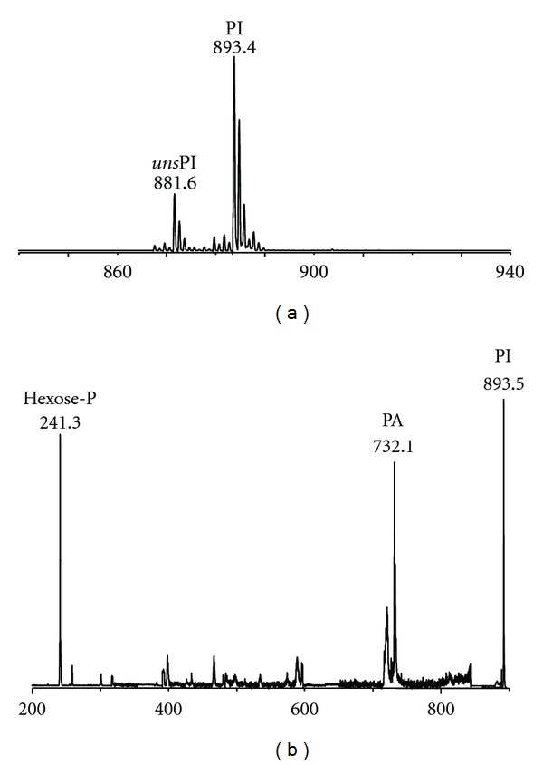 MALDI-TOF mass (a) and PSD fragment ion (b) spectra of band 3 of P. <t>furiosus</t> . (a): the lipid components present in band 3 (see <t>TLC</t> in Figure 3 ) were isolated and purified from the total lipid extract of the P. furiosus by preparative TLC. Peaks corresponding to the molecular ions of diphytanylglycerol analogue of phosphatidylinositol (PI) at m/z 893.4 and of the corresponding unsaturated species ( uns PI) at m/z 881.6. (b): peaks corresponding to the molecular ion of PIat m/z 893.45 plus the ion fragments corresponding to the diphytanylglycerol analogues of PA ( m/z 732.1) and to the sugar-phosphate residue ( m/z 241.3).