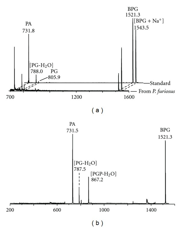 (a) Comparison of the MALDI-TOF mass spectra of the lipid component in band 7 of P. furiosus (see TLC in Figure 3 ) and the authentic standard BPG (i.e., diphytanylglycerol analogue of bisphosphatidylglycerol) isolated from Halobacterium salinarum . (b) PSD fragment ion spectrum of the diphytanylglycerol analogue of BPG of P. furiosus. Abbreviations: PA: diphytanylglycerol analogue of phosphatidic acid; PG: diphytanylglycerol analogue of phosphatidylglycerol; PGP: diphytanylglycerol analogue of phosphatidylglycerolphosphate.