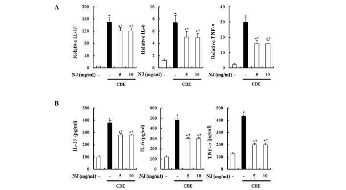 Effect of NJ on TNF-α, IL-1β and IL-6. To examine production of TNF-α, IL-1β and IL-6 (A) serum levels and (B) mRNA levels in the pancreas were measured by ELISA and real-time RT-PCR, respectively. Data are represented as the means ± SEM (n=6 in each group). * P