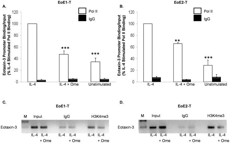 Omeprazole (Ome) decreases IL-4-stimulated RNA Pol II binding to the endogenous eotaxin-3 promoter in (A) EoE1-T and (B) EoE2-T cells. Data are the means ± SEM of 3 separate experiments. **, p≤0.01 compared to IL-4 stimulation; ***, p≤0.001 compared to IL-4 stimulation Isotype matched IgG served as a control. Representative experiment demonstrating that omeprazole reduces the levels of IL-4 stimulated H3K4me3 bound to the endogenous eotaxin-3 promoter in (C) EoE1-T and (D) EoE2-T cells. Isotype matched IgG served as a control. Depicted is one of 3 separate experiments. M, marker.