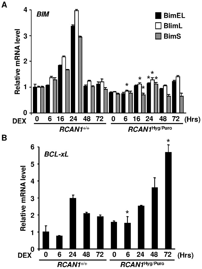RCAN1 disruption changed expression levels of BIM and Bxl-xL mRNAs. Total RNA was extracted from RCAN1 +/+ and RCAN1 Hyg/Puro cells, treated with 10 −6 M DEX for the period indicated, and subjected to quantitative real-time RT-PCR using primer sets hybridizing to each BIM isoform ( A ) (*, p
