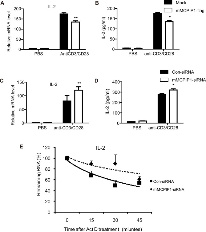 MCPIP1 negatively regulate IL-2 expression in the mouse CD4 + T lymphocytes. (A–B). Overexpression of MCPIP1 inhibits IL-2 expression. Purified CD4 + T lymphocytes were transiently transfected with mMCPIP1-flag or control plasmids by electroporation. After incubated for 4 h, cells were challenged with anti-CD3 and anti-CD28 Abs for 12 hours. Cells and cultured medium were harvested and IL-2 mRNA level was measured by Q-PCR (A) and protein level was detected by ELISA (B). (C–D). Knockdown of MCPIP1 promotes IL-2 expression. Purified CD4 + T lymphocytes were transiently transfected with MCPIP1-siRNA or control-siRNA by electroporation. After incubated for 4 h, cells were challenged with anti-CD3 and anti-CD28 Abs for 12 hours. Cells and cultured media were harvested and IL-2 mRNA level was measured by Q-PCR (C) and protein level was detected by ELISA (D). (E). MCPIP1 destabilizes IL-2 mRNA in mouse CD4 + T lymphocytes . Purified CD4 + T lymphocytes were transiently transfected with MCPIP1-siRNA or control-siRNA by electroporation. After incubated for 4 h, cells were challenged with anti-CD3 and anti-CD28 Abs. After 6 hours, actinomycin D (10 µg/ml) was added to stop transcription, and total RNA was harvested after 0, 15, 30, or 45 min. IL-2 mRNA levels were measured by Q-PCR and normalized to β-actin mRNA. The normalized level of IL-2 mRNA at time 0 was set at 100. Data were presented as mean ± S.D of three independent experiments. *P