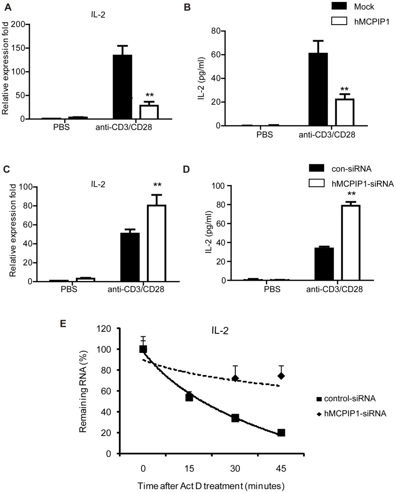 MCPIP1 negatively regulates IL-2 gene expression in human peripheral CD4 + T lymphocytes. (A–B). Overexpression of MCPIP1 inhibits IL-2 expression. Human peripheral mononuclear cells (PBMC) were obtained from healthy subjects by Ficoll-Hypaque density centrifugation. Purified CD4 + T lymphocytes were transiently transfected with hMCPIP1-flag or control plasmids by electroporation. After incubated for 4 h, cells were challenged with anti-CD3 and anti-CD28 for 12 hours. Cells and cultured media were harvested and IL-2 mRNA level was measured by Q-PCR (A) and protein level was detected by ELISA (B). (C-D).MCPIP1 Knockdown promotes IL-2 expression stimulated by anti-CD3 and anti-CD28 Abs. Purified CD4 + T lymphocytes were transiently transfected with control-siRNA or MCPIP1-siRNA by electroporation. After incubated for 4 h, cells were challenged with anti-CD3 and anti-CD28 Abs for 12 hours. Cells and cultured media were harvested and IL-2 mRNA level was measured by Q-PCR (C) and protein level was detected by ELISA (D). (E). MCPIP1 destabilizes IL-2 mRNA in human CD4 + T lymphocytes . Purified CD4 + T lymphocytes were transiently transfected with MCPIP1-siRNA or control-siRNA by electroporation. After incubated for 4 h, cells were challenged with anti-CD3 and anti-CD28 Abs. 6 h later, actinomycin D (10 µg/ml) was added to stop transcription, and total RNA was harvested after 0, 15, 30, or 45 min. IL-2 mRNA levels were measured by Q-PCR and normalized to β-actin mRNA. The normalized level of IL-2 mRNA at time 0 was set at 100. Data were presented as mean ± S.D of three independent experiments. *P
