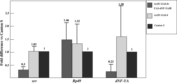 Knockdown of dNF-YA reduces sev mRNA levels in third instar larvae. dNF-YA mRNA and sev mRNA levels were measured by quantitative RT-PCR. mRNA for Rp49 was used as a negative control. Fold differences against the amplification with RNA samples from Canton S are shown with standard deviations from three independent preparations of RNA.