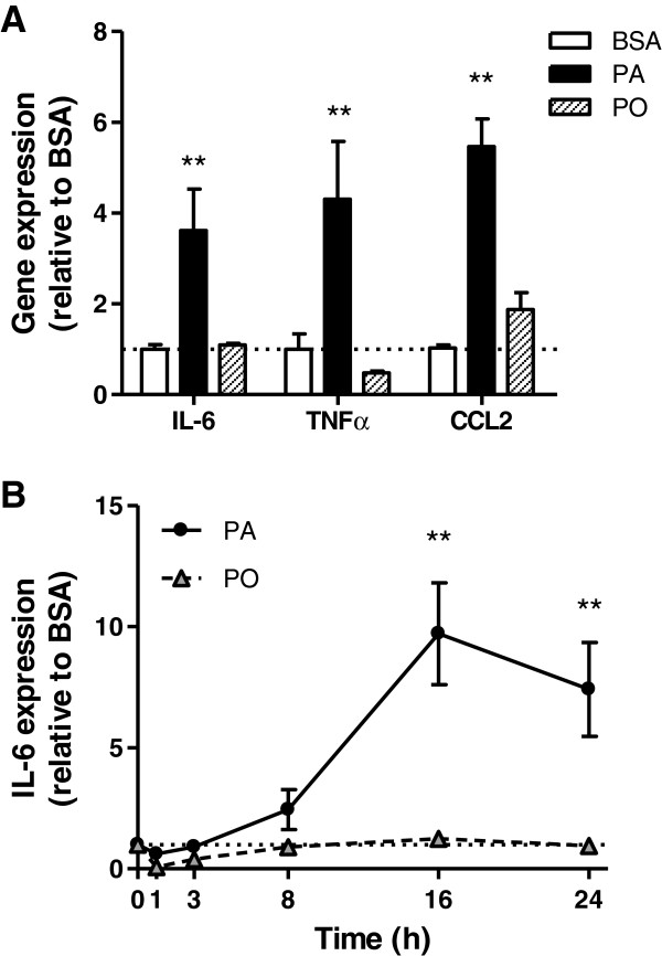 Low level palmitate treatment activates inflammatory cytokine chemokine gene expression in muscle cells. L6 muscle cells were treated with 0.2 mM palmitate (PA), palmitoleate (PO) or BSA control for (A) 24 h or (B) at the times indicated. A ) mRNA expression was analyzed by qRT-PCR using primers for TNFα IL-6 and CCL2. B ) mRNA expression was analyzed by qRT-PCR using primers for IL-6. Results are normalized to the reference gene hprt1 and then to the BSA control and reported as fold change ±SEM (n≥3), **p