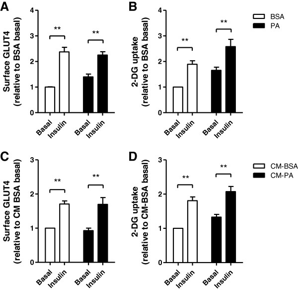 Palmitate treatment does not induce insulin-resistance in muscle cells. A-B ) The direct effect of PA was measured by treating L6 cells with 0.2 mM palmitate (PA), palmitoleate (PO) or BSA control for 24 h, followed by 3 h serum starvation and insulin stimulation (20 min, 100 nM) in the absence of PA. C - D ) The indirect effect of palmitate through a possible autocrine effect was tested by generating conditioned media from muscle and applying it on naive untreated muscle cells. Surface GLUT4 myc and glucose uptake were measured as described in Methods. Results are normalized to the CM-BSA control and expressed as mean ± SEM (n=4), **p
