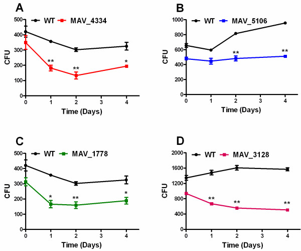 Intracellular survival of mutants compared to WT in human monocytes. Human blood monocytes (1.0x10 6 ) from healthy volunteers were infected (MOI 10) with mutants and WT. Intracellular bacteria were quantified after 4 hour of infection, and after 1, 2, 4 days. The monocytes were lysed in 1 ml of sterile water and 100 μl of 1:500 dilution in sterile water of sample were plated on <t>Middlebrook</t> agar plates supplemented with <t>ADC</t> for CFU counting. A : WT and mutant MAV_4334; B : WT and mutant MAV_5106; C : WT and mutant MAV_1778; D : WT and mutant MAV_3128. Statistical analysis was done using a two tailed, paired Student's t test. When compared to wild-type a P