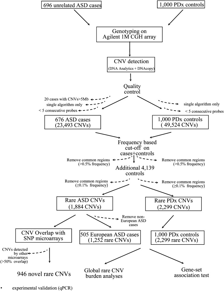 CNV analysis workflow. The ASD cases and controls were typed using the Agilent 1M CGH array, and CNVs were identified using two algorithms, DNA Analytics and DNAcopy. CNVs detected by both algorithms were defined as the stringent dataset and were used for novel rare variant discovery. Rare variants were defined as described in the Materials and Methods . The 1884 rare ASD CNVs (as reported in Table S2) were compared with the CNVs obtained from SNP microarray studies and this resulted in identification of 946 rare CNVs that were novel to the Agilent 1M CGH platform. The rare CNVs from only European ASD cases (505 cases) were then used for global rare CNV burden analysis and gene-set association tests by comparison to 1000 PDx controls.