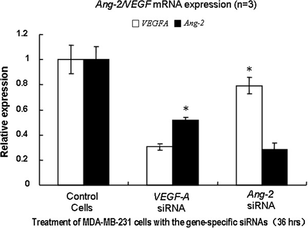 RNA interference of VEGF and Ang-2. MDA-MB-231 cells were transfected with the pooled siRNAs with lipofectamine 2000 (Invitrogen). Thirty-six hours after the transfection, total RNA from cultured cells was extracted by use of Trizol (Invitrogen). Real-time quantitative PCR was conducted to assess the level of the target mRNA expression using SYBR green dye, with relative changes calculated by the ΔΔCt method. While the suppression of either of VEGF or Ang-2 caused significant reduction of the other when compared with the siRNA controls, inhibition of VEGF lead to a dramatic decrease in the level of Ang-2 . The results indicate that Ang-2 is more likely regulated by VEGF .