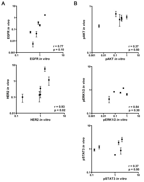 Correlation between in vitro and in vivo expression of EGFR/HER2 and pAKT/pSTAT3/pERK1/2 in 6 HNSCC lines. A ) Correlation between in vitro and in vivo expression of EGFR and HER2. B ) Correlation between in vitro and in vivo expression of pAKT, pERK1/2 and pSTAT3. Expression was assessed by western blot analysis and depicted in relative units. The integrated optical density (IOD) was measured and all values were normalized to those of α-tubulin by dividing the IOD value for that specific marker by the IOD value of α-tubulin. In vitro expression of UT-SCC5 was set as standard. Error bars represent standard error of the mean and all axes are in log scale. Correlations between in vitro and in vivo expression were assessed using the Spearman correlation test.