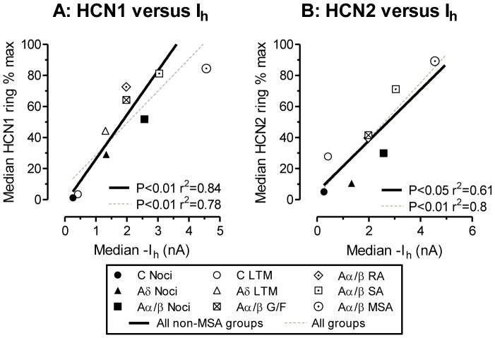 Ring staining for HCN1 and HCN2 versus I h in different neuronal groups. Median values for HCN1 and HCN2 ring intensity for the different neuronal subgroups plotted against published median I h values taken from Table 1 in Gao et al., 2012, for the same neuronal subgroups, thus each symbol represents medians from one subgroup. Note that unlike the immunocytochemistry, the I h was measured in non-dye injected neurons. For ranges of values in each group see Fig. 2 and 3 and Gao et al 2012. Because I h and HCN2 were both significantly higher in MSAs than for any other neurons, we show the linear regressions for all groups excluding MSAs (black lines) and for all groups including MSAs (grey dashed lines).