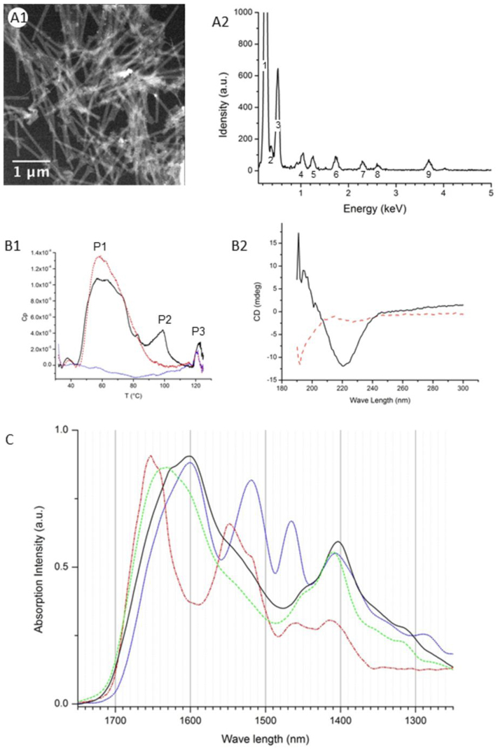 Biophysical characterization of Roseobacter sp. YSCB spinae. Panel A1 (TEM) shows the sample from where the XEDS spectra (A2) were obtained. The peaks correspond to carbon (1), nitrogen (2), oxygen (3), sodium (4), magnesium (5), silicium (6), sulfur (7), chore (8) and calcium (9). Panel B1 is a representative DSC spectrum of the extracted spinae samples. The scan rate is 1°C per min. The thermograms of the subsequent first, second and sixth scan are presented in black (line), red (dash-line) and blue (dot-line), respectively. Panel B2 shows the CD spectroscopy results of the sample before (black line) or after (red dash-line) the first DSC scan. Panel C is IR spectra of amide I bands of the spinae extraction without treatment (black line), or treated at 100°C for 20 min (green dash-line) or with 2 mg/ml proteinase K for overnight at room temperature (blue dot-line). The spectrum of the recombined proteinase K (100 mg/ml) was measured and presented as a reference (red dash-dot-line). The curves are normalized to fit into the same scale.