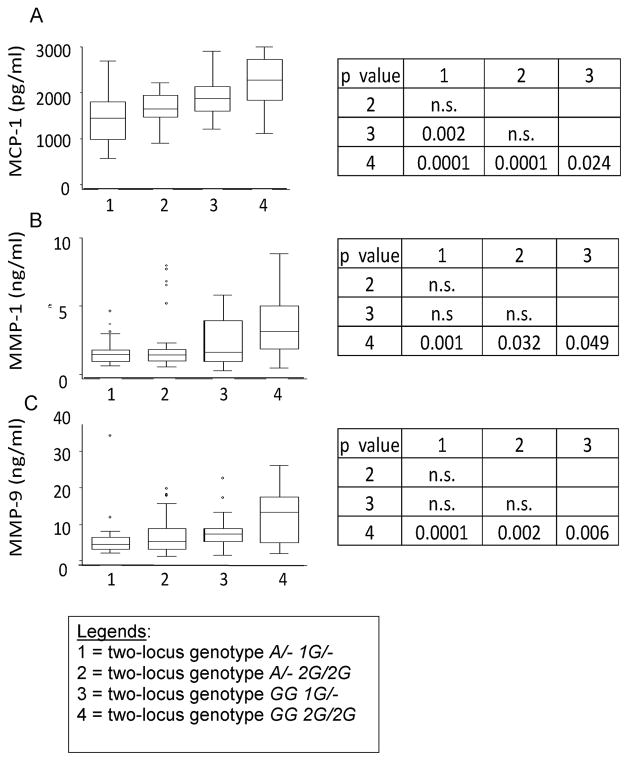 TB patients carrying the two-locus genotype -2518 MCP-1 GG -1607 MMP-1 2G/2G have the highest serum levels of MCP-1 and the highest plasma levels of MMP-1 and MMP9 Values are shown as medians (horizontal lines), the 25th and 75th percentiles (boxes), and ranges (whiskers). Legends in the x-axis mean: 1 = two-locus genotype A/- 1G/-; 2 = two-locus genotype A/- 2G/2G; 3 = two-locus genotype GG 1G/-; 4 = two-locus genotype GG 2G/2G ). Section A: Distribution of serum MCP-1 values for tuberculosis patients stratified according to the relevant two-locus genotypes. We observed a significant difference in the serum levels of MCP-1 across genotypes (ANOVA F = 16.31; p = 0.0001). Section B: Distribution of plasma MMP-1 values for tuberculosis patients stratified according to the relevant two-locus genotypes. We observed a significant difference in the plasma levels of MMP-1 across genotypes (ANOVA F = 5.76; p = 0.001). Section C: Distribution of plasma <t>MMP-9</t> values for tuberculosis patients stratified according to the relevant two-locus genotypes. We observed a significant difference in the plasma levels of MMP-9 across genotypes (ANOVA F = 8.25; p = 0.0001). Comparison of means and standard deviations by genotypes are shown at the right of the whiskers and box figures. The p-values are based on the Bonferroni least significant difference test.