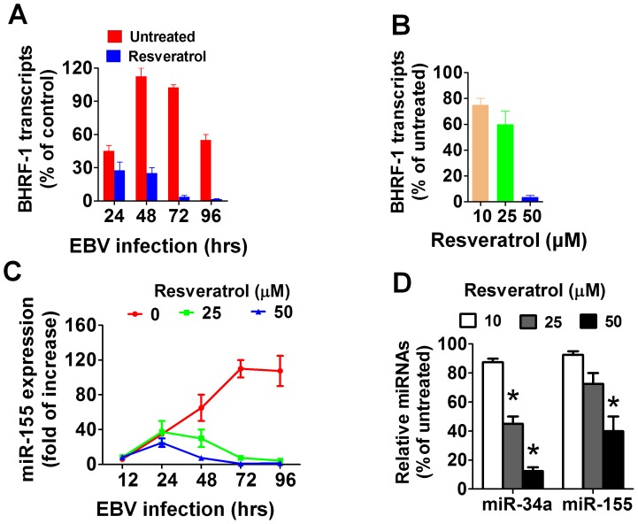 Resveratrol inhibits the expression of viral-induced anti-apoptotic genes in EBV-infected B cells. (A) Primary B cells were infected with EBV and cultured for the indicated times in the absence or presence of resveratrol (50 µM). The level of BHRF1 transcripts normalized to U6B RNA, were measured by qRT-PCR using a lytic infected LCL as a reference control sample. Each data point shown represents the mean±SEM of three independent experiments (B). B cells were infected with EBV and cultured for 72 hours. They were then collected and treated for another 24 hours with or without resveratrol and the BHRF1 transcripts were measured by qRT-PCR (C) EBV infected B cells were cultured for the indicated times in the presence or absence of resveratrol (50 µM) and their levels of miR155 were measured by qRT-PCR (D) EBV-immortalized LCLs (1×10 6 ) were treated with resveratrol for 24 hrs and the expression of miR-155 and miR-34a were determined by qRT-PCR. The bars in figures B and D represent the means±SEM of three independent experiments.