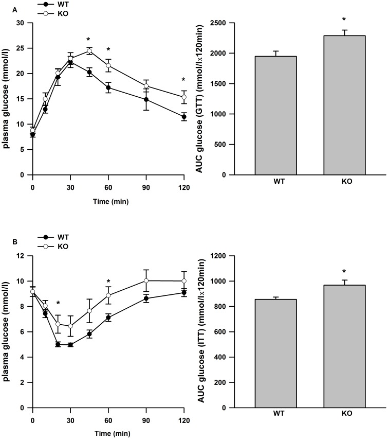 Glucose and insulin tolerance in WT and IL-6 −/− mice fed a HFD. Glucose curves and the quantified area under the curves for glucose (A, B) and insulin (C, D) tolerance tests. Data are presented as means +SE for 8–10 mice per group. * P