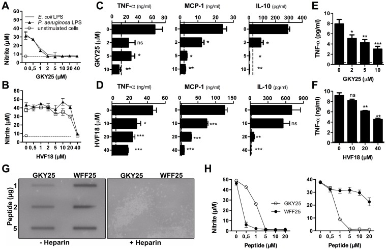 Thrombin-derived peptides modulate the cytokine response to LPS in vitro. (A and B) Measurement of nitrite release of RAW 264.7 macrophages stimulated with 10 ng/ml E. coli or P. aeruginosa LPS in combination with the indicated concentrations of GKY25 and HVF18 (n = 3). (C and D) RAW 264.7 cells were stimulated with 10 ng/ml E. coli LPS and cytokines were analysed in the cell supernatants (n = 3). (E and F) Human blood was treated with 10 ng/ml E. coli LPS alone, or with LPS and GKY25 (E) or HVF18 (F). After 6 h of incubation TNF-α was determined in plasma by ELISA (n = 3). (G) Binding of GKY25 and WFF25 to 125I -labeled E. coli LPS using a slot blot assay. (H) Stimulation of RAW 264.7 cells by LPS and the effects of peptides. Left panel: LPS was incubated with GKY25 or WFF25, followed by addition of serum and incubation with the cells. Right panel: Standard procedure as in A. Peptides were added to cells pre-incubated briefly with LPS in <t>DMEM</t> with 10% <t>FBS</t> (n = 3).