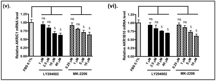 Down-regulation of Nrf2 in human lung A549 cells decreases expression of cytoprotective genes A) A549 cells were seeded and grown in DMEM that contained 10% FBS for about 24 h before transfer to DMEM containing 0.1% FBS for 16 h. The cells were then treated for 8 h with various doses of either LY294002 or MK-2206 in DMEM containing 0.1% FBS, as indicated, before lysates were prepared and the levels of individual proteins measured by Western blotting. The antibody that recognised both phospho-GSK-3α (Ser-21) and phospho-GSK-3β (Ser-9) was from Cell Signalling (#9331). B) A549 cells were grown as described above. After serum depletion for 16 h, they were treated for 2 h with various doses of LY294002 or MK-2206 and transferred to fresh DMEM containing 0.1% FBS for a further 6 h before being harvested. Messenger RNA levels were measured by TaqMan RT-PCR.