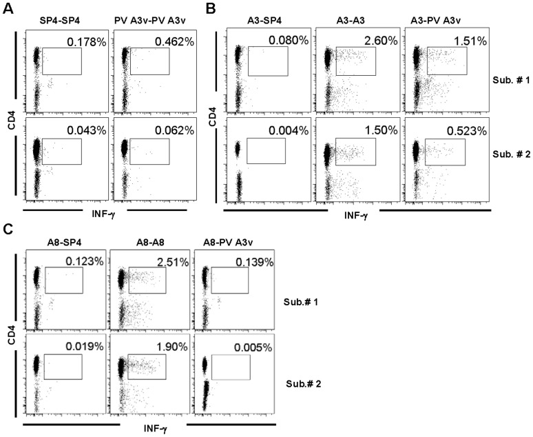 EV71 A3 or A8-specific CD4+ T cells respond to the poliovirus 3 Sabin (PV3) homolog, A3v peptide. PBMCs from two adult subjects were cultured in the presence of EV71 A3, EV71 A8, PV3 A3v, or SP4 peptides for 4 days and then with recombinant human IL-2 for additional 3 days. The cells were washed and re-stimulated with SP4, EV71 A3 or PV A3′, then surface-stained with fluorescent antibodies against CD3 and CD4 molecules and intracellularly for the production of IFNγ. Gated CD3+ cells are shown. (A) SP4 or PV3 A3v-stimulated cells were re-stimulated with the respective peptides. (B) EV71 A3-stimulated cells were re-stimulated with SP4, EV71 A3 or PV3 A3v, respectively. (C) EV71 A8-stimulated cells were re-stimulated with SP4, EV71 A8 or PV3 A3v, respectively. The above results were representative data from three independent experiments.