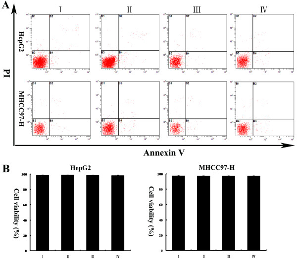 (A, B) HepG2 and MHCC97-H cells were treated as detailed in the legend to Figure 4 . Annexin V assays revealed that the cell viability of HepG2 and MHCC97-H cells transfected with pcDNA3.1-Tg737 and further incubated with fresh DMEM (1% FBS) for 12 h under hypoxia were not significantly different from cells without plasmid transfection. The data from HepG2 and MHCC97-H cells transfected with pcDNA3.1 (−) or incubated with LipofectamineTM 2000 excluded any liposome/pEGFP-C1-related effects on cell viability.I: cells without plasmid transfection; II: cells transfected with pcDNA3.1 (−); III: cells incubated with LipofectamineTM 2000; IV: cells transfected with pcDNA3.1-Tg737.