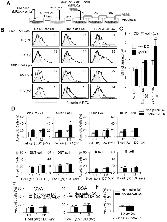 Fas-independent T-cell apoptosis in DC-transferred MRL/ lpr mice. (A) Experimental protocol of T cell apoptosis by repeated co-culture with DCs. Total T cells from MRL/ lpr mice (5×10 4 ) were repeatedly (three times) co-cultured with BMDCs (2.5×10 5 ) from MRL+/+ or MRL/ lpr mice for 8 hours without interval. BMDCs were stimulated with RANKL and CII for 24 hours before the co-culturing. (B) After the third co-culture, apoptosis of CD4 + and CD8 + T cells expressing annexin-V was detected by flow cytometry. Staining of T cell with FITC-labeled isotype control Ab is shown as a dotted line. Results are shown as representative of three independent experiments with similar results. (C) MFI of annexin-V on CD4 + T cells was calculated, and the data are shown as the means ± SD of triplicate samples. (D) Induction of T-cell apoptosis by repeated co-culturing with activated DCs. Purified CD4 + , CD8 + , DNT, and B220 + cells (5×10 4 ) were repeatedly co-cultured with BMDCs (5 and 25×10 4 ). Annexin-V + cells are shown as the means ± SD of triplicate samples. The experiments were repeated three times with similar results. *p