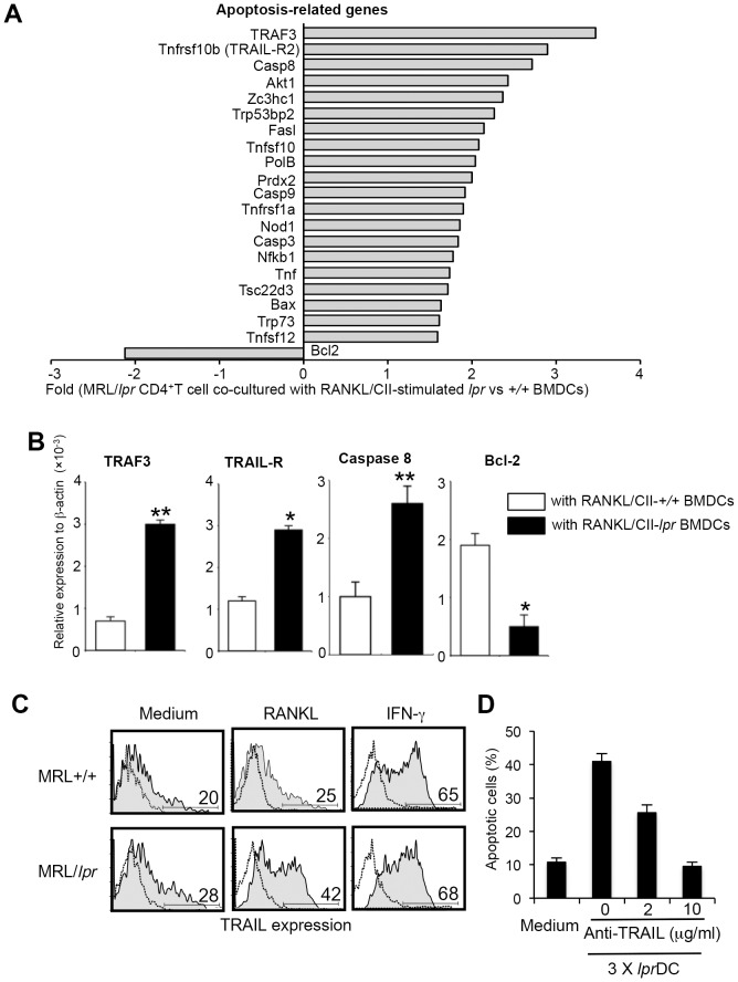 T-cell apoptosis via TRAIL/TRAIL-R2. (A) Real-time RT-PCR for a wide array of apoptosis-related genes was performed using mRNA samples of MRL/ lpr CD4 + T cells repeatedly stimulated with MRL/ lpr and MRL+/+ BMDCs. Gene expression of CD4 + T cells repeatedly stimulated with MRL/ lpr BMDCs was compared with those stimulated with MRL+/+ BMDCs (controls). Genes with increased and decreased expression are shown as fold of control. The experiments were repeated twice with similar results. (B) The mRNA expression of TRAF3, TRAIL-R2, caspase 8, and Bcl-2 was confirmed by quantitative real-time PCR analysis. Relative expression to β-actin level is shown as means ± SD from triplicate samples. The experiments were repeated three times with similar results. (C) Up-regulation of TRAIL expression on MRL/ lpr BMDCs by RANKL was detected by flow cytometry. Staining of DC with FITC-labeled isotype control Ab is shown as a dotted line. The experiments were repeated three times with similar results. (D) lpr CD4+ T cells were repeatedly co-cultured with activated lpr DCs in the presence of anti-TRAIL mAb. Data are shown as means ± SD of triplicate samples. *p