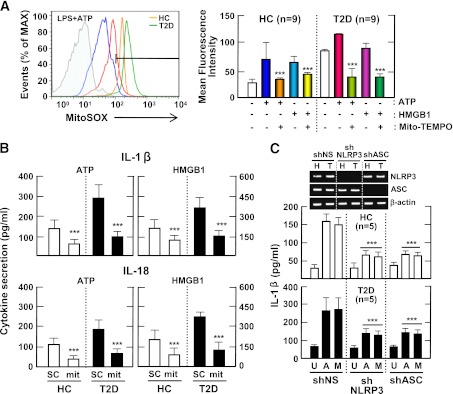 Upregulated NLRP3 inflammasome activation in patients with type 2 diabetes (T2D) is mediated by mitochondrial ROS. A : PBMCs isolated from T2D patients ( n = 9) and healthy controls (HCs; n = 9) were primed with LPS (10 ng/mL) for 4 h and then stimulated with ATP (1 mmol/L) or HMGB1 (10 ng/mL) for 1 h in the absence or presence of Mito-TEMPO (mit; 200 μmol/L). Then, the cells were stained with MitoSOX, gated for the CD14 + population, and analyzed by flow cytometry. Representative images (left) and quantitative analysis of mean fluorescence intensities (right) are shown ( A , right). Data are expressed as means ± SEM. B : MDMs from T2D patients ( n = 5) and HCs ( n = 5) were primed with LPS (10 ng/mL, for 4 h), and then stimulated with ATP (1 mmol/L) or HMGB1 (10 ng/mL) for 1 h in the absence or presence of Mito-TEMPO (mit; 200 μmol/L). C : MDMs from T2D patients ( n = 5) and HCs ( n = 5) were transduced with nonspecific control shRNA lentiviral particles (shNS) or lentiviral shRNA specific for NLRP3 (shNLRP3) or ASC (shASC), primed with LPS, and stimulated with ATP (1 mmol/L for 1 h) or MSU (100 μg/mL for 6 h). ELISA analysis of IL-1β ( B and C ) and IL-18 ( B ). Data are expressed as means ± SEM. C : Representative images of gels run to assess transduction efficiency by semiquantitative RT-PCR analysis (top). ***P
