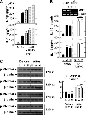 AMPK pathway activation inhibits the induction of <t>IL-1β</t> and IL-18 production by various inflammasome stimuli in LPS-primed MDMs. Primary MDMs were isolated from healthy controls ( A and B ; n = 5) or type 2 diabetic patients ( C ; n = 11) before and after treatment with metformin for 2 months. A : MDMs were primed with LPS (10 ng/mL) for 4 h in the presence of a high glucose concentration (15 mmol/L) and then treated with compound C (Comp C; 5, 10, or 25 μmol/L) and stimulated with ATP (1 mmol/L for 1 h). Data are expressed as means ± SEM of five independent experiments. B : MDMs were transduced with nonspecific control shRNA lentiviral particles (shNS) or lentiviral shRNA specific for AMPK (shAMPK). Then, the cells were primed with LPS (10 ng/mL) for 4 h in the presence of a high glucose concentration (15 mmol/L) and treated with ATP or MSU (100 μg/mL for 6 h). Data are expressed as means ± SEM of three independent experiments. Representative images of semiquantitative RT-PCR gels run to assess transduction efficiency (top). C : The cells were primed with LPS (10 ng/mL) for 4 h in the presence of autologous sera and then treated with ATP or MSU. A and B : ELISA of IL-1β and IL-18 levels. C : Western blotting analysis of p-AMPKα protein levels. The intensity of each band for each protein was quantified and normalized to the housekeeping protein β-actin ( C , right). Data are expressed as means ± SEM. *** P
