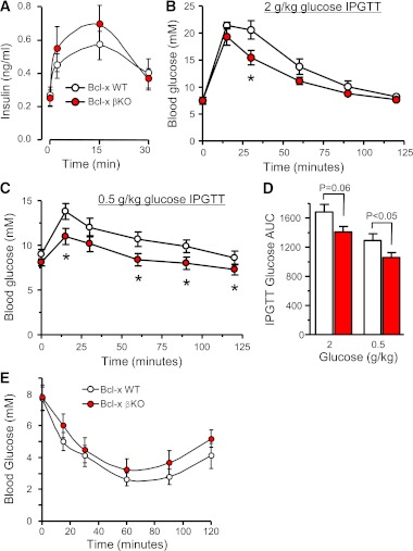 Improved glucose tolerance in Bcl-x βKO mice. A : In vivo insulin secretion following intraperitoneal injection of 2 g/kg glucose in 10–12-week-old Bcl-x WT and βKO littermate mice ( n = 5). B and C : Intraperitoneal glucose tolerance tests of Bcl-x βKO and WT mice using 2 and 0.5 g/kg glucose doses ( n = 7 and n = 8, respectively; * P