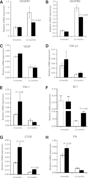 Decrease in VEGF receptor expression and upregulation of TGF-β-induced profibrotic gene expression in Per2 mutant retinas. There was no significant change in VEGFR1 ( A ) or VEGFR2 ( B ) expression in retinas of 4-month-old Per2 mutant mice; however, there was a dramatic decrease in mRNA expression of both receptor expressions in 12-month-old animals. VEGF expression remained unchanged in both groups ( C ). Per2 mutant retinas showed a profound increase in mRNA expression of TGF-β1 ( D ) and its downstream effectors PAI-1 ( E ), ID-1 ( F ), CTGF ( G ), and FN ( H ). The most prevalent change in mRNA expression was observed in 4-month-old Per2 mutant mice for TGF-β1, PAI-1, and FN, whereas ID-1 expression was significantly increased in 12-month-old Per2 mutant mice. CTGF mRNA was increased in both age groups. n = 7 for 4-month-old mice; n = 3 for 12-month-old mice; white bars, wild type; black bars, Per2 mutant.