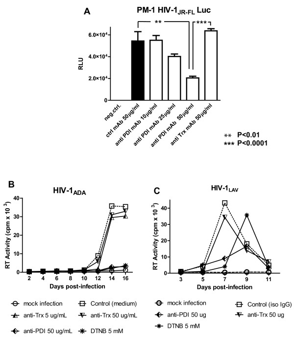 Anti - PDI, but not anti - Thioredoxin mAbs inhibit HIV - 1 infection in PM - 1 T - cell line. A . PM-1 cells were pre-incubated for 1 h in RPMI-1640 containing the indicated concentrations of nonspecific mouse IgG, anti-PDI or anti-Trx mAbs prior to infection with HIV-1 JR-FL Env pseudotyped, Luc reporter gene-encoding virus particles for 2.5 h in the presence of the different mAbs. After the infection period, cells were washed and further incubated for 48 h in RC-10 before being lysed with 0.5% Triton-X100 in PBS and Luc activity was measured. B , C . Following preincubation for 30 minutes with 5 mM DTNB, anti-PDI or anti-Trx mAbs, PM-1cells were infected with HIV-1 ADA (panel B ) or HIV-1 LAV (panel C ). After infection for 2 h in the presence of the aforementioned inhibitors, the PM-1 cells were washed and further incubated in RC-10 without DTNB or mAbs. Cell culture supernatants were collected every two days and cryopreserved before being evaluated for RT activity.