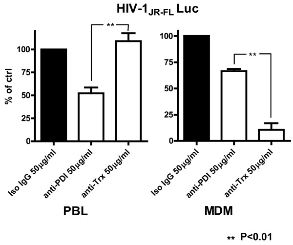 Cell - Type Specific Requirements for Thioredoxin and / or PDI in HIV - 1 Infection in Primary Human Cells. PHA stimulated PBL were pre-incubated for 1 h with relevant mAbs (50 μg/ml) and then infected for 2.5 h with HIV-1 JR-FL Env pseudotyped, Luc reporter gene encoding virus particles in the continued presence of the mAbs. After infection, the cells were washed and further incubated for 48 h in RPMI supplemented with 10% FCS and L-Glutamine prior to lysis (0.5% Triton-X100 in PBS) and Luc activity was then measured. MDM were treated and infected in an identical manner, using DMEM medium. The amount of HIV-1 Env pseudotyped virus particles was adjusted according to the number of cells subjected to infection. Primary human MDM or PBLs from four different donors were prepared and tested as described in Methods. The RLU established for the anti-PDI or anti-Trx mAbs treated cells were calculated as a percent of the mean Luc activity of cells pre-incubated and infected in the presence of nonspecific mouse IgG. The means of the four established values from each donor for the anti-PDI or anti-Trx mAbs treated PBL and MDM are presented in the left and right panel of Figure 5 , respectively.