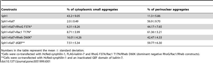 Kalirin-7 decreases synphilin-1-induced aggregates in biochemical and live cell analysis. (A) HEK293 cells were transfected with HcRed-synphilin-1 alone or cotransfected with FLAG-kalirin-7. HcRed empty vector served as control. Cells were lysed 24, 48 or 72 h after transfection, fractionated by AGERA on 2% agarose gels and analyzed by western blotting with an antibody recognizing synphilin-1 aggregates. S, HcRed-synphilin-1; K, FLAG-kalirin-7; C, control (HcRed empty vector). Indicated by a bracket on the right is the the major area of aggregate signal which was used for quantification. (B) Quantification of AGERA blots of 3 independent experiments for each time point and condition relative to the mean expression level of controls at 24 hrs post-transfection confirmed an increase of aggregates over time and a reduced number of aggregates in cells doubly transfected with kalirin-7 and synphilin-1 compared to cells transfected with synphilin-1 alone at 48 and 72 hours. (C) Long-term time-lapse imaging. HEK293 cells were transfected with HcRed-synphilin-1 and empty EGFP vector (upper chart) or EGFP-kalirin-7 (lower chart) and observed by live cell imaging fluorescent microscopy (Cell Observer, equipped with an Axio Observer.Z1 and an ApoTome Imaging System Zeiss, Germany) at 37°C. Depicted are average intensity projections of 6–8 ApoTome optical slides encompassing the entire height of the cells. Time-points indicate hours post-transfection. Images were merged from red, green and phase contrast channels. Arrows indicate the cell traced over the experimental time. Scale bar , 10 µm. (D) Quantification (n > 35 cells per group) of the time-lapse imaging shows that aggregate numbers are reduced when FLAG-kalirin-7 is coexpressed. Light gray bars: Sph alone; dark gray bars: Sph and Kal7 coexpression. Results represent the average of three independent experiments. The asterisks indicate statistical significance (* P ≤0.05). Error bars , S.E.