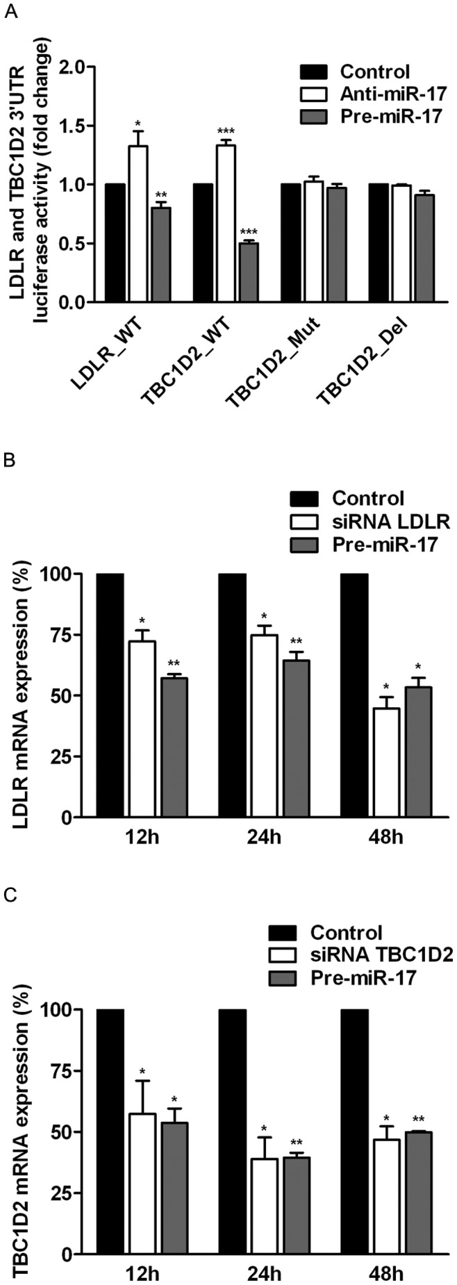TBC1D2 and LDLR are directly targeted by miR-17. ( A ) miR-17 targets 3′UTRs of TBC1D2 and LDLR as determined by a luciferase reporter assay. HeLa cells were co-transfected with the reporters containing wild-type 3′UTRs of LDLR and TBC1D2 and mutated 3′UTR of TBC1D2, Pre-miR-17 and Anti-miR-17. Luciferase activity was measured 24 h following co-transfection. The activity of luciferase for each experiment was normalized to the activity of the control samples, co-transfected with the respective reporter vector and control Anti-miR or Pre-miR (see Methods ). The bars show mean fold changes of luciferase activity and the error bars show s.e.m. derived from 3 independent experiments. Over-expression of miR-17 decreased the expression level of LDLR ( B ) and TBC1D2 ( C ) mRNAs as determined by qRT-PCR. The relative expression levels of TBC1D2 and LDLR after treatment with siRNAs and Pre-miR-17 were normalized to the expression level when control siRNAs and control Pre-miR were transfected (see Methods ). Bars show mean of the relative mRNA expression levels and error bars show s.e.m. derived from 2 independent experiments. *, p≤0,05; **, p≤0,01; ***, p≤0,001.
