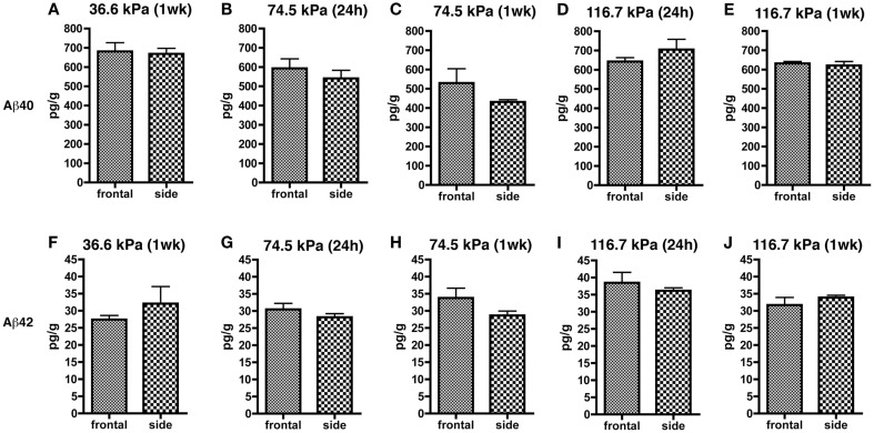 Results of Aβ 40 (A–E) and 42 (F–J) ELISAs on Triton X-100 brain extracts are presented for rats exposed to frontal or side blast exposures of 36.6 (A,F), 74.5 (B,C,G,H), or 116.7 kPa (D,E,I,J) harvested at 24 hours (24 h) or 1 week (1 wk) post-blast exposure . Values are presented ± the SEM. There were no statistically significant differences between any of the pair wise comparisons (unpaired  t -tests) demonstrating that orientation to the blast had no effect on levels of Aβ 40 or 42. Further statistical tests are discussed in the text. Sample sizes were:  (A,F)  (6 frontal and 4 side),  (B,G)  (8 frontal and 10 side),  (C,H)  (3 frontal and 5 side),  (D,I)  (5 frontal and 4 side), and  (E,J)  (4 frontal and 5 side).