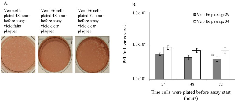 Vero E6 cells are suitable for quantitation of EBOV plaques. ( A ) Vero and Vero E6 cells produce EBOV plaques. ( B ) EBOV titers are similar in ATCC Vero E6 cells plated 24, 48 or 72 hours prior to plaque assay. This experiment was performed twice, and one representative graph is shown. Each bar represents an average of 5 replicates. The * indicates p = 0.006 between 24 and 72 hour samples for passage 29.