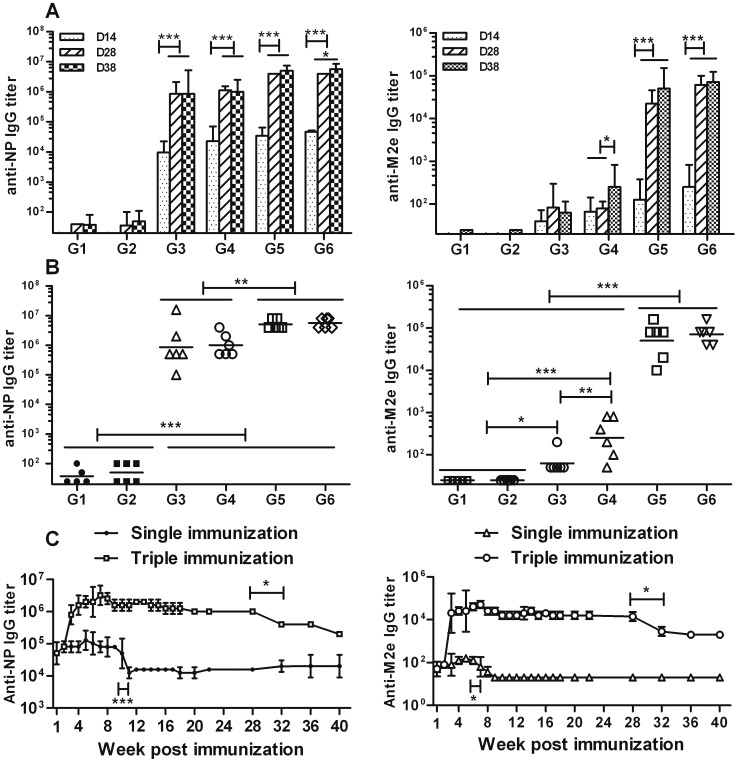 Antibody response trend and long-term humoral immune response induced by NM2e protein in mice. (A and B) Mice were immunized intramuscularly with 10 µg of NM2e protein three times at 2-week intervals. Al(OH) 3 and/or CpG 1826 were used as adjuvants. Mice immunized with normal saline (NS) or adjuvant alone was used as negative controls. Serum was obtained from each mouse on days 14, 28, and 38, respectively, and analyzed for the presence of IgG antibodies specific for NP (left) or M2e (right), in an ELISA, as described in the Materials and Methods. Antibody response trends after three immunizations are presented in A, and the comparison of results on day 38 are presented in B. Columns show geometric mean antibody titers, and bars indicate the 95% confidence interval in each group. Plots in B show the NP- and M2e-specific IgG titers of all of the mice in each treatment group on day 38, and bars indicate the geometric mean antibody titers of each treatment group ( n = 6 mice per experimental group, except n = 5 mice in the NS group). Lines above two or more groups indicate that they have the same comparative results. *, p ≤0.05; **, p ≤0.01; ***, p ≤0.001 by one-way ANOVA. (C) Mice were immunized intramuscularly with 10 µg of NM2e protein formulated with Al(OH) 3 three times at 2-week intervals or immunized with a single dose of 10 µg of NM2e formulated with Al(OH) 3 . Serum was prepared from each mouse at the indicated times, and NP- and M2e-specific IgG antibodies were analyzed by ELISA, as described in the Materials and Methods.