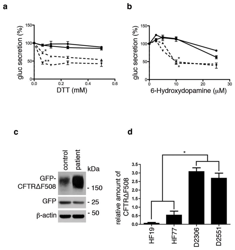 DYT1 patient fibroblasts are sensitive to ER stress and less able to degrade GFP-CFTRΔF508 (a b) Primary skin fibroblasts from two DYT1 patients (dashed lines; D2551 =Δ; D2306 = ∇) and two controls (solid lines; HF19 = circle; 2131 = square) were infected with a lentivirus vector carrying the expression cassette for Gluc followed 72 h later by exposure to varying concentrations of (a) DTT or (b) 6-OHDA for 4 h. The activity of Gluc in the medium was measured using a luminometer 15 , 34 . DTT treatment results are shown as the mean of 3 experiments ± S.D. at 0.625 mM concentration (where control lines gave essentially equal values). The difference between D2551 and controls was *p