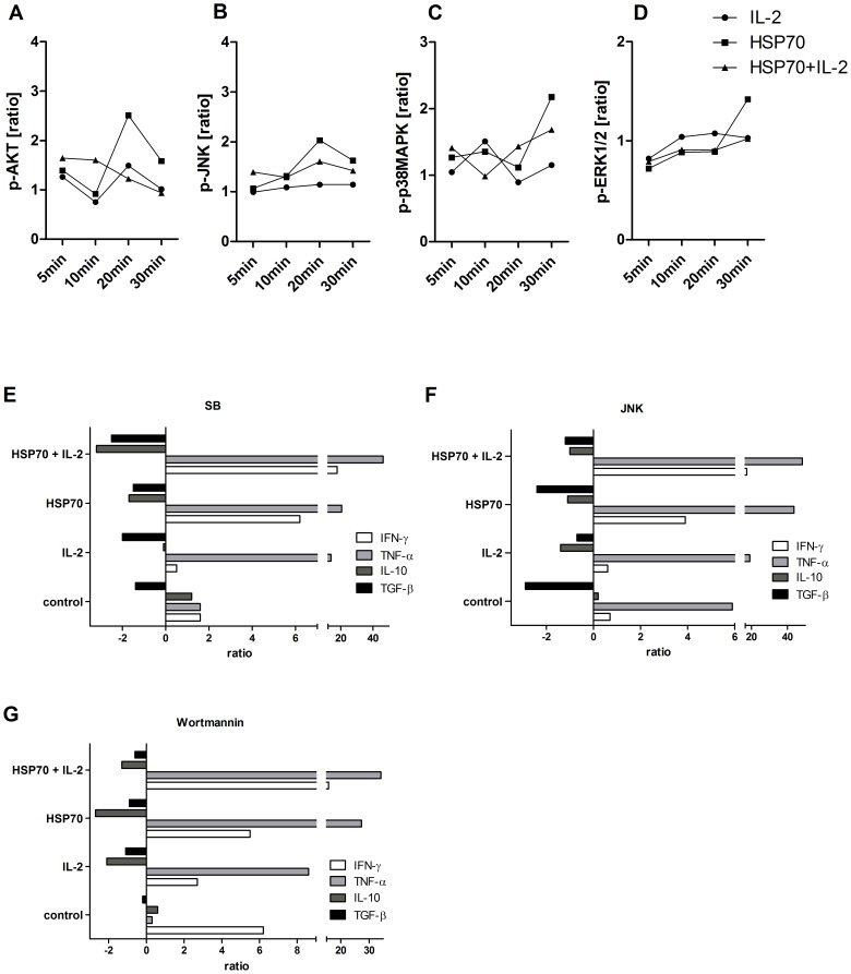 HSP70 mediates phosphorylation of AKT, p38, JNK and ERK1/2 in CD4 + CD25 + T cells and suppressive capacity of these cells could be influenced by the respective inhibitors. CD4 + CD25 + Treg cells were incubated alone, with IL-2 (200 U/ml), HSP70 (10 µg/ml) or both for 10 min washed and exposed to anti-CD3 antibodies (OKT3, 1 µg/ml) for 5, 10, 20 and 30 minutes. Phosphorylation for intracellular kinases ( A ) phospo-AKT [p-AKT Ser 473 ], ( B ) phospo-JNK [p-JNK Thr 183 /Tyr 185 ], ( C ) phospo-p38 MAPK [p-p38 MAPK Thr 180 /Tyr 182 ] and ( D ) phospo-ERK1/2 [p-ERK1/2 Thr 202 /Tyr 204 /Thr 185 /Tyr 187 ] was determined by the bead-based multiplex assay (Luminex xMAP technology). Untreated CD4 + CD25 + T cells were adjusted to 1.00 by the use of the Bio-Plex Manager 6.0 software and used to calculate the ratios. Furthermore, CD4 + CD25 + T cells were treated with 5 µM of the following intracellular signal transduction inhibitors: ( E ) Wortmannin, ( F ) JNK or ( G ) SB 203580 for 15 min before incubation alone, with IL-2 (200 U/ml), HSP70 (10 µg/ml) or both for 2 h. Cells were then co-cultured with CD4 + CD25 − T cells (E∶T ratio 1∶5) on 96-well plates coated with anti-CD3 antibodies (OKT3, 1 µg/ml) in serum-free medium for 48 h. Supernatants were analyzed for IFN-γ, TNF-α, IL-10 and TGF-β. Results of four independent experiments, expressed as mean fold increases or decreases in comparison to results obtained for experiments without preactivation of Tregs and without inhibitor treatment (control).