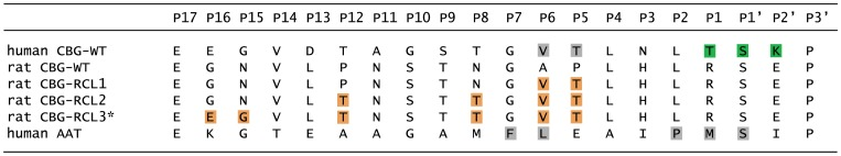 Alignment of reactive center loop sequences of CBG variants and of closely related AAT. The RCL sequence shows a high degree of variance even within closely related proteins. The numbering of residues in the RCL of SERPINs is commonly in relation to the normal cleavage site in AAT between P1 and P1′. Already known cleavage sites are shown with grey boxes. The new cleavage site in human CBG observed in the structure is depicted in green. Introduced mutations in rat CBG-RCL1 through RCL3 are marked by orange boxes. The variant marked with an asterix bears in addition two mutations in the top of β-sheet A deleting a salt-bridge by converting it to amino acids present in human CBG (D323N, R174K). The wild-type protein sequences are annotated in the Uniprot knowledgebase with the following accession codes: rat CBG, P31211; human CBG, P08185; human AAT; P01009. The amino acids in the RCL are numbered following the convention of Schechter and Berger, 1967 [49] .